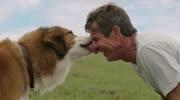 比《一条狗的使命》还催泪,17万人哽?#39318;?#30475;完,至今不敢看第二遍