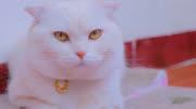 會說話的折耳喵:為什麼貓咪都看不起人類呢?今天我終於明白了!