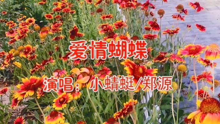 鄭源 小蜻蜓一首《愛情蝴蝶》唱的經典好聽,情意綿綿,醉人心扉