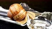 蜗牛爬过玻璃碎片时,会被玻璃割伤吗?结果出人意料!